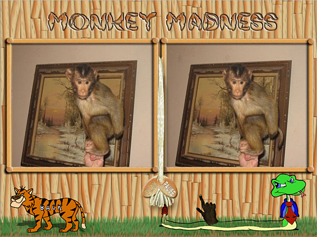 Video for Monkey Mania